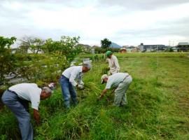 弥生植物の収集作業