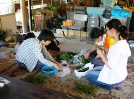 繊維・染色植物収集